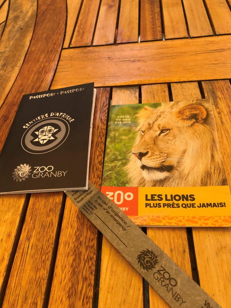Les lions sont à l'honneur, mais tout le sentier d'Afrique se refait une beauté.