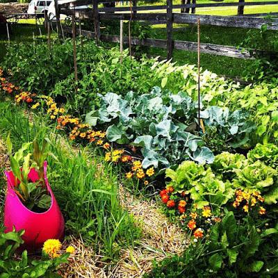 35 millions de fleurs sauvages pour #ramenonslesabeilles Julie Philippon