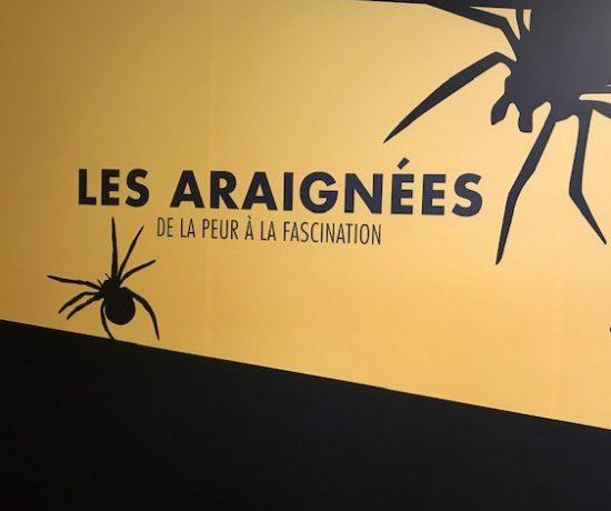 Les araignées sont des créatures fascinantes, quand on arrive à voir ce quelles ont à offrir. #centredessciences #montréal #activitéenfamille #apprendre