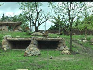 Les lions sont très visibles, même du bas de la colline.