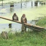 La famille de macaques japonais s'est agrandie encore cette année. C'est fantastique de les voir.